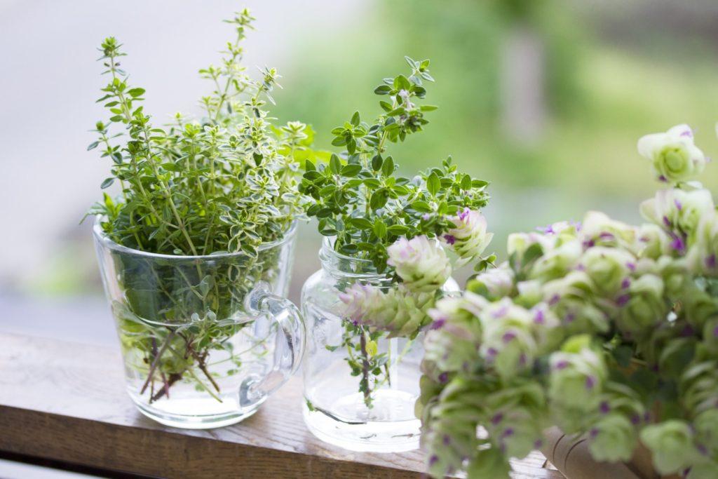 【健康】植物の力でセルフケア「手軽に健康ケア!」