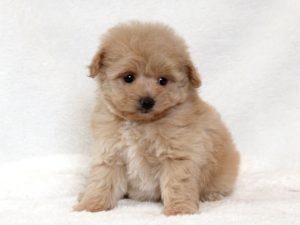 【ペット It's!】「もしもペットを飼うことになったら?」きちんと準備したいペットを飼う前の準備!
